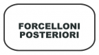 FORCELLONI